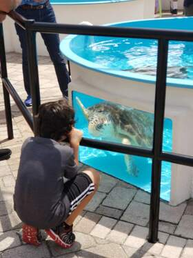 Homeschool Workshops at Loggerhead Marinelife Center Palm Beach County